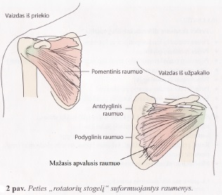 po horizontalios peties sąnarių skausmo reumatoidinio artrito gydymas biologiniais vaistais