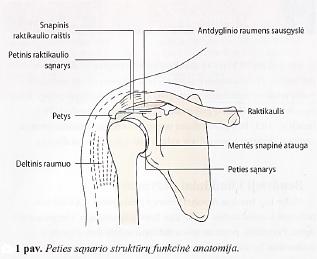 skausmas peties sąnario dešinės rankos grietinėlės