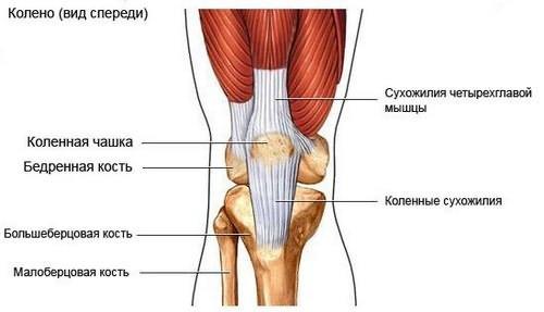 kam susisiekti su skausmais į rankas sąnarių raumenų skausmas ir dilbio sąnariai