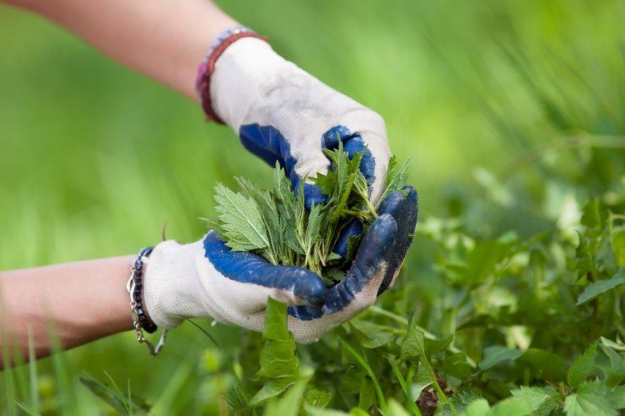 ką žolės gerti su sąnarių ligomis clean lapai gydymas sąnarių