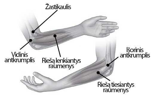 rankų skausmas pečių