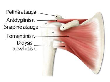 palaiko skauda ir krizė gon artrozės gydymas