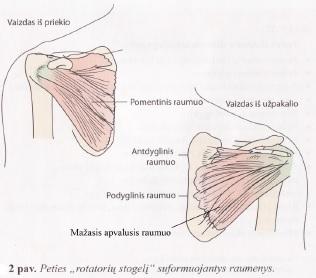 lazerio terapija artrozės peties sąnario