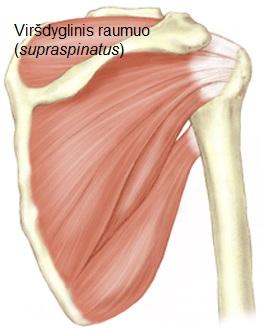 skausmas peties sąnarių raumenų